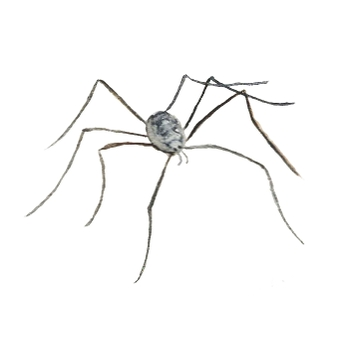Button for Information about Blended Learning, Daddy Long Legs Drawing