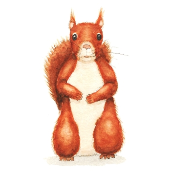 Button for Information about Oak and Orca School, Red Squirrel Drawing